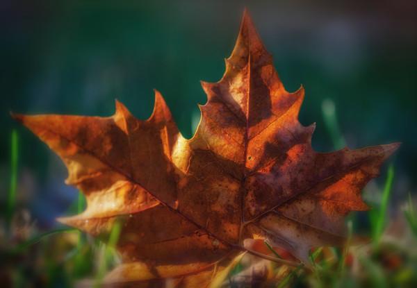 leaves-2-5