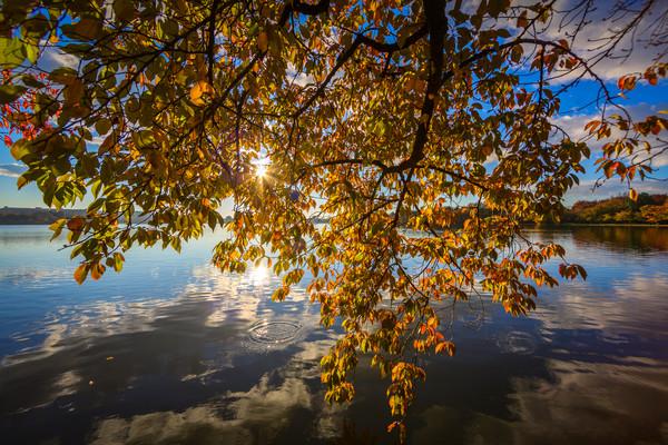 leaves--2