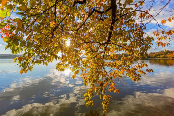 leaves--3