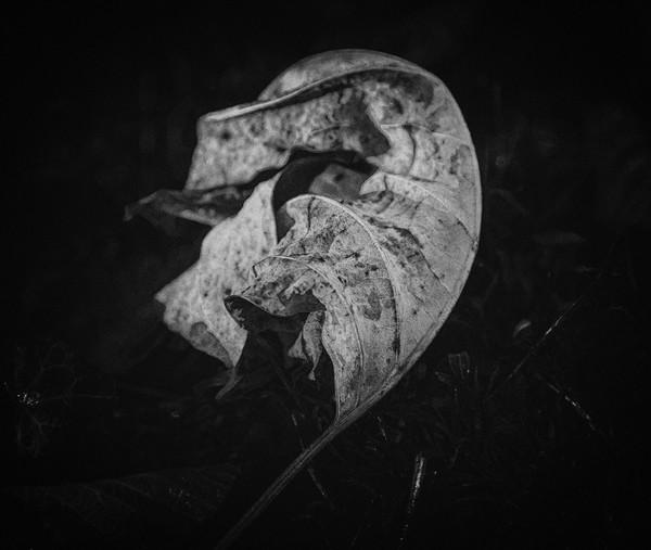 leaves--17