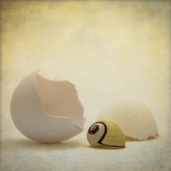 Egg, Shell Fine Art Print