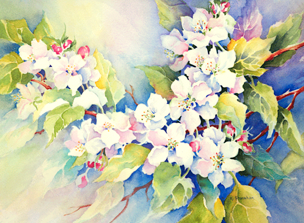 Apple Blossoms fine art print by Karen Shanahan.