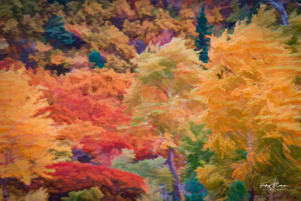 Flurry of Autumn 2