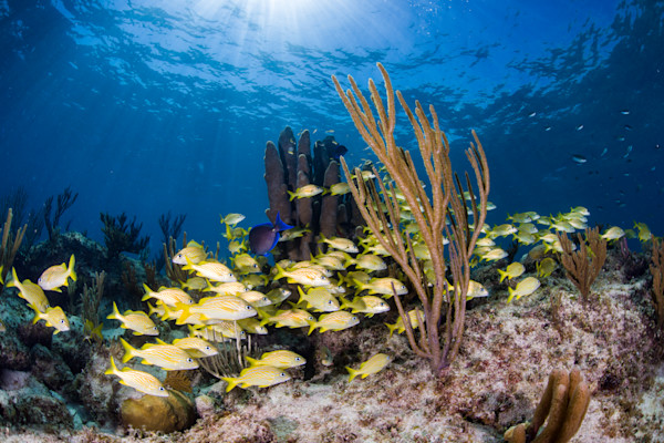 Schooling Reef Fish