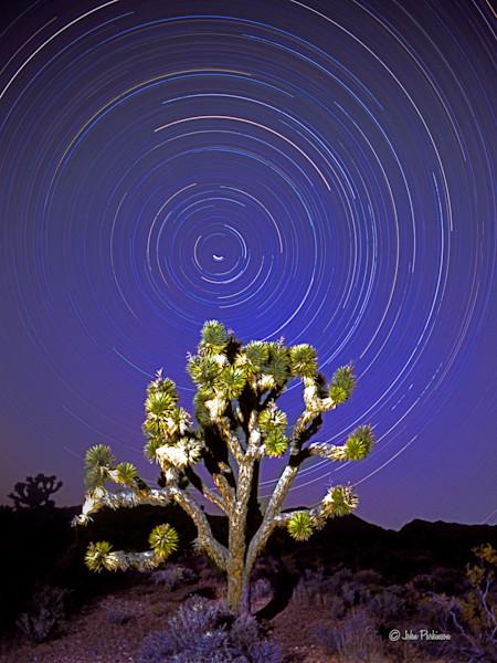 Juniper tree and star trails