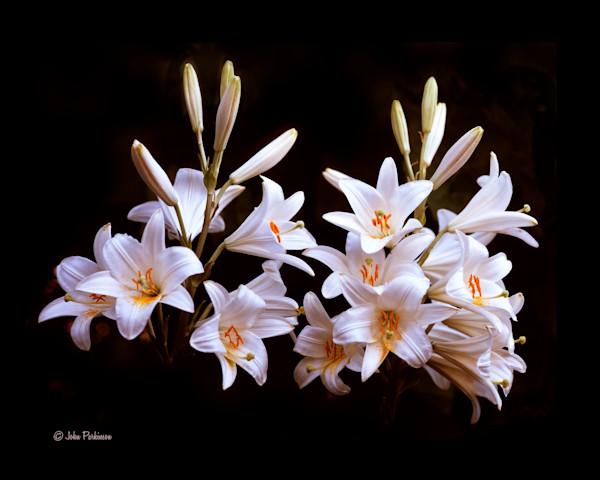 Mountain Lillies