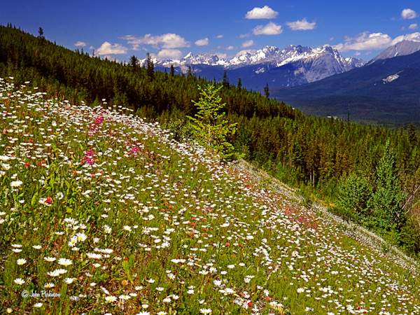 Kootenay Wildflowers