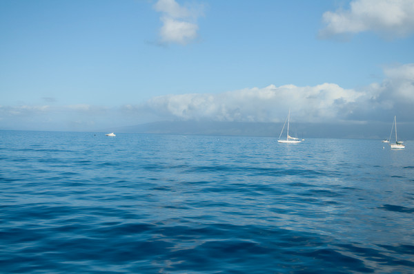 Sailboat Float on the Maui Surf