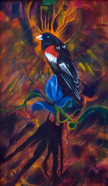Long Tailed Widow Bird Art | Metaphysical Art Gallery