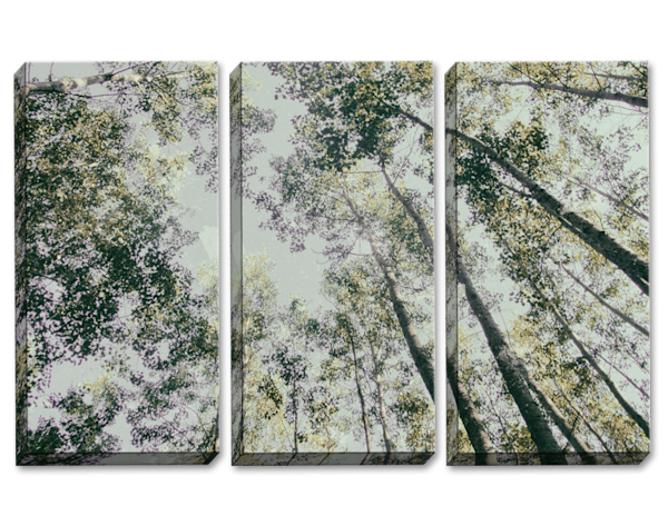 Shaking Your Tree Triptych
