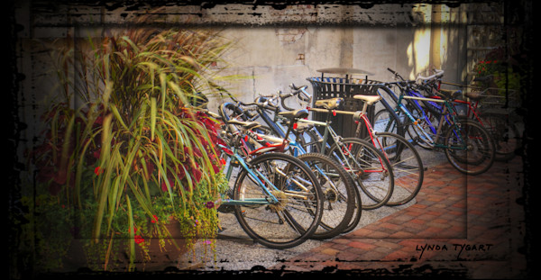 Tygart Fort Collins bicycles pano