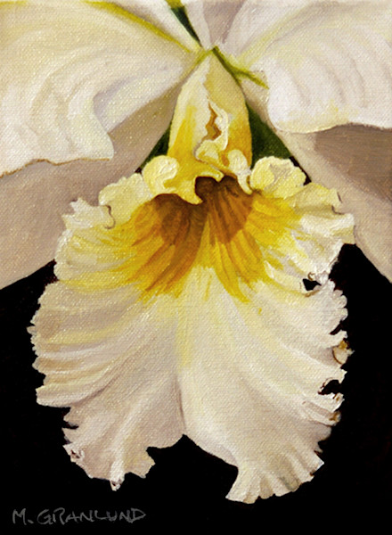 White Cattleya Orchid Painting by Mark Granlund