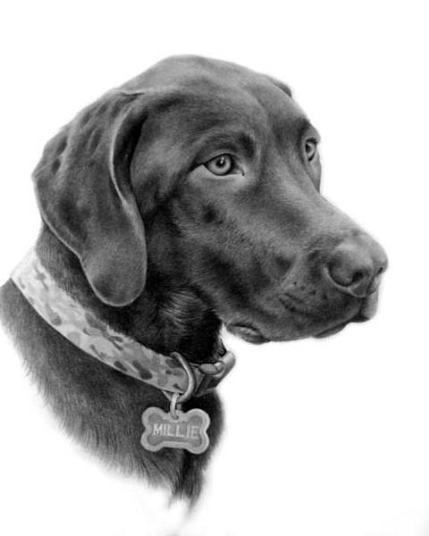 custom pencil pet portraits