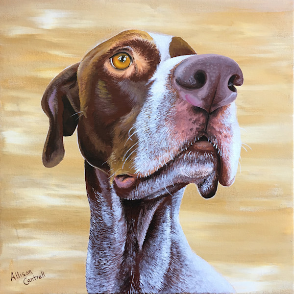 German Shorthair (Calvin)