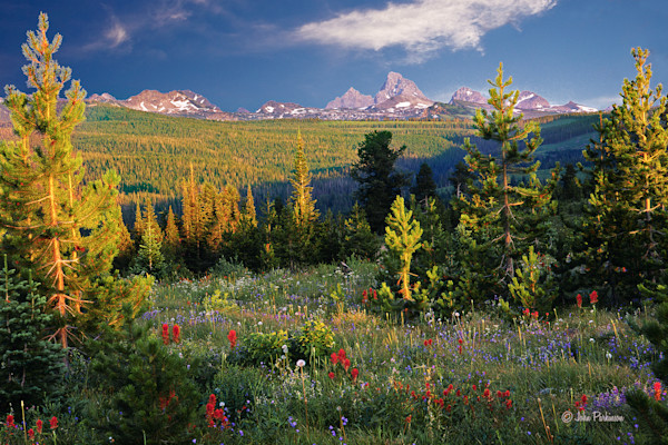 Teton Meadow, the west slope of the Teton peaks, Idaho