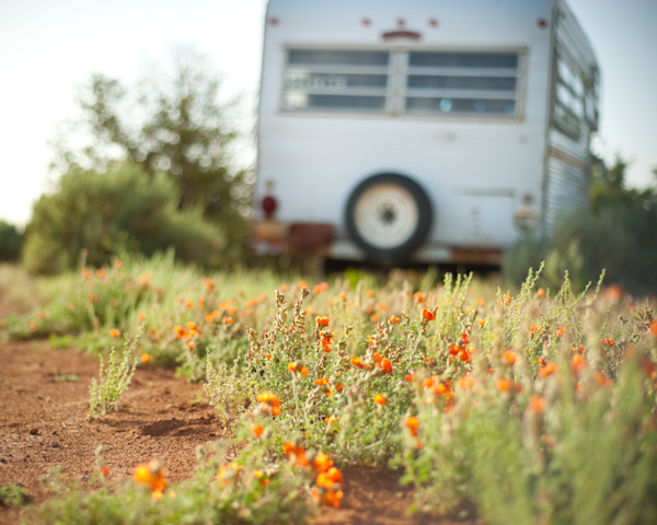 Chinle Campsite Flowers