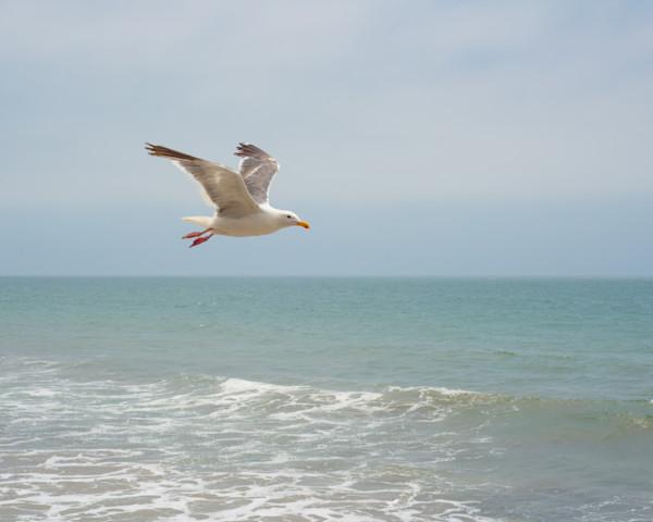 Ventura Flight