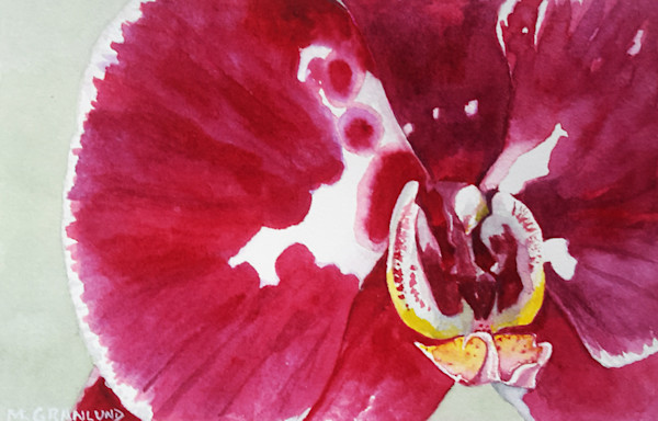 Pink and White Phalaenopsis Orchid painting by Mark Granlund