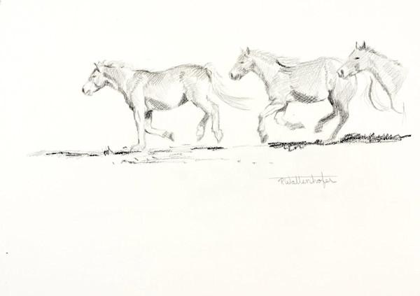 "Raymond Wattenhofer Pencil Sketch For ""Corral Bound"""