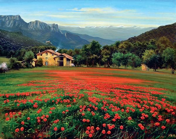Poppies in Falgars