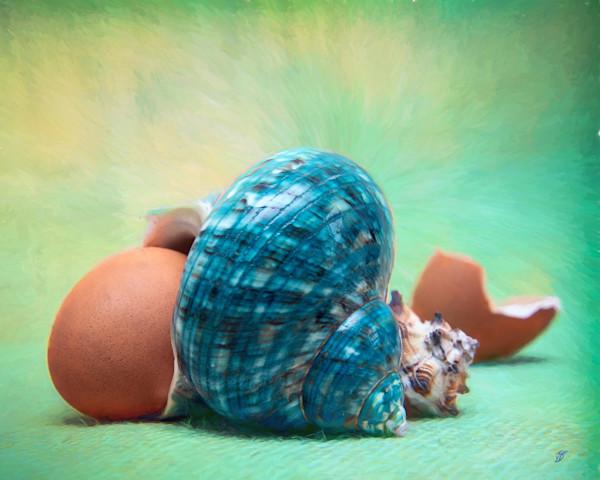 Photograph Art Sea Shell