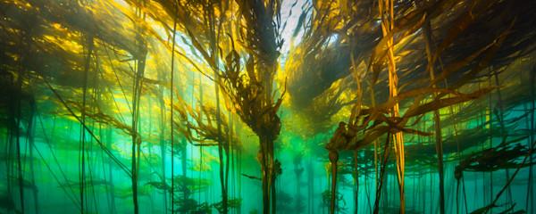 Underworld Kelp Pano
