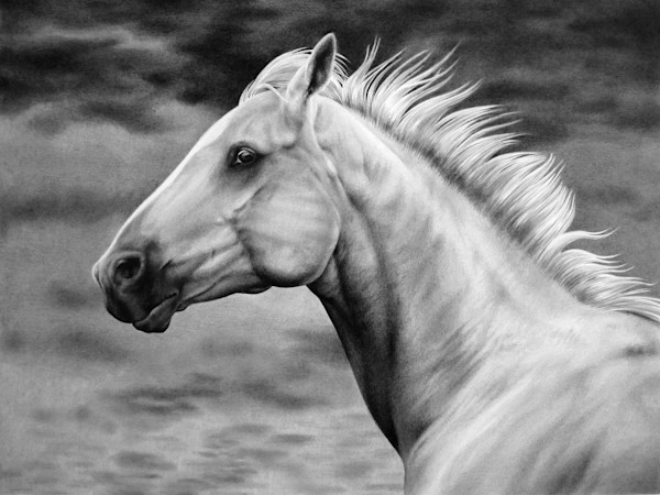 Fine art horse print by Allison Cantrell