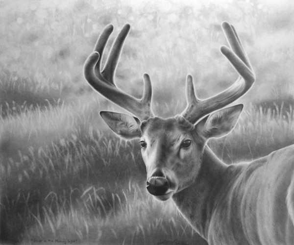 Wildlife fine art print by Allison Cantrell