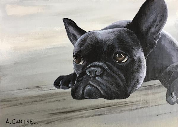 Pup Study 10 french bulldog fine art painting