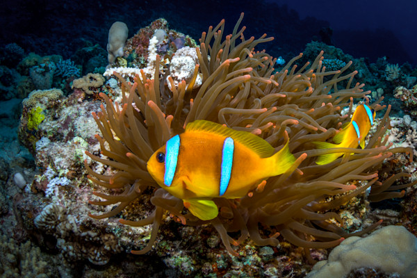 Clownfish Haven