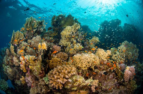 Reef Abundance
