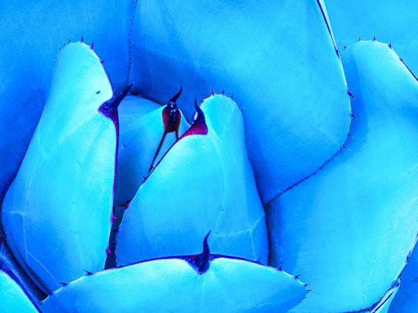Arctic Agave