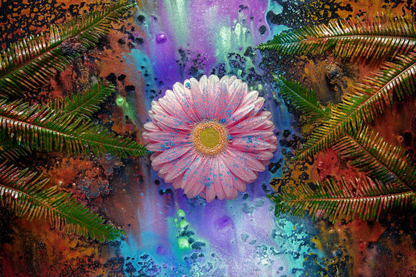 Pink Gerber Daisies, Mica Pigments, Powders and inks, Abstract art photographs,