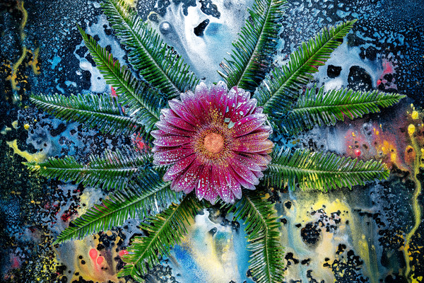 Red Gerber Daisies, Art photographs with Mica pigments, Fern leaves and plants,