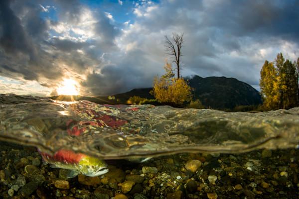 Morning Salmon Run