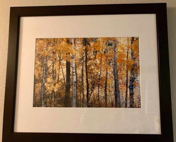 Framed Fall Aspens