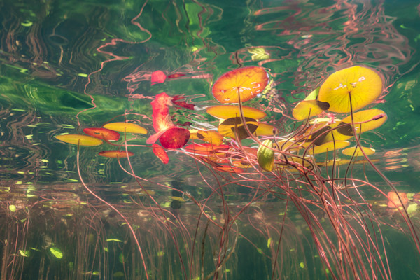 Painted Lilies