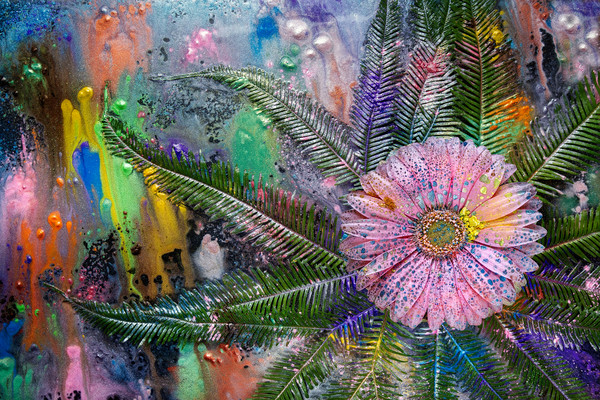Gerber Daisy Art, Gerber Daisy Flowers, Mica Pigments and inks,