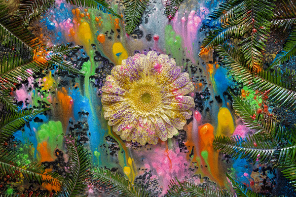 Yellow Gerber Daisies, yellow flowers, Mica pigment powders,