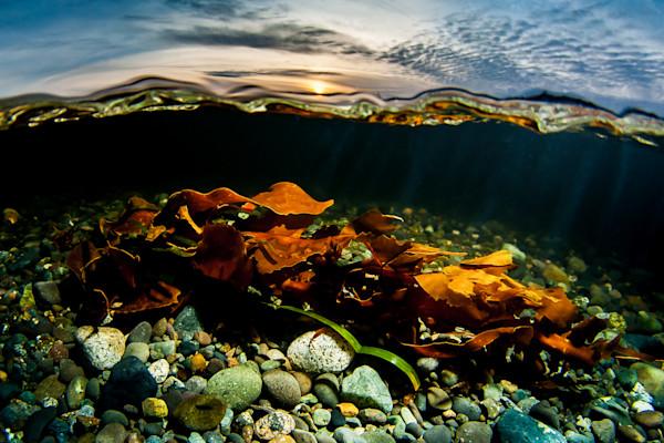 Kelp Sunset
