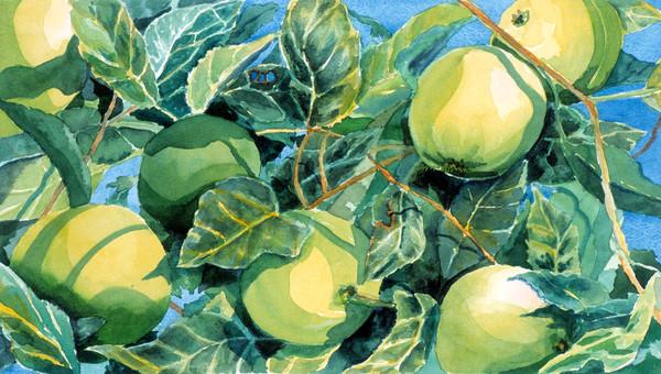 Green Apple Midwest Farm