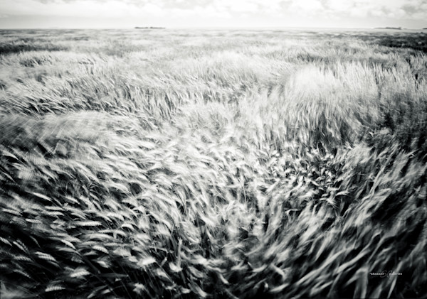 Landscapes, Abstract Landscape