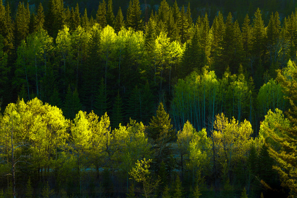 Shades of Spring.Banff national Park|Canadian Rockies|Rocky Mountains|