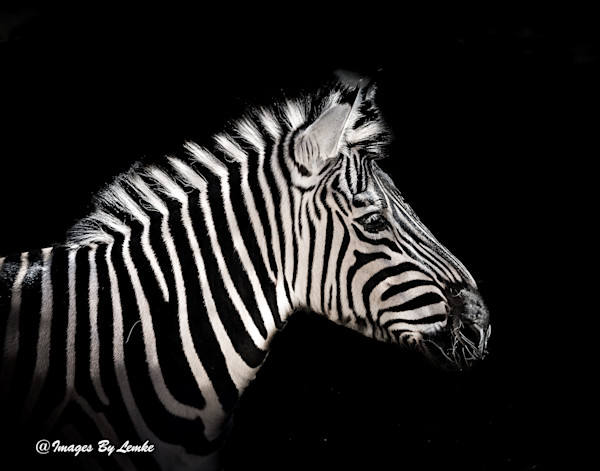 Other Animal Shots