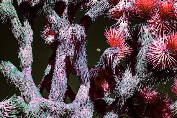 close up on a Joshua Tree, art, photography, infrared photography