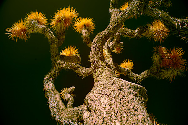 looking up at a Joshua tree, art, photography, infrared photography