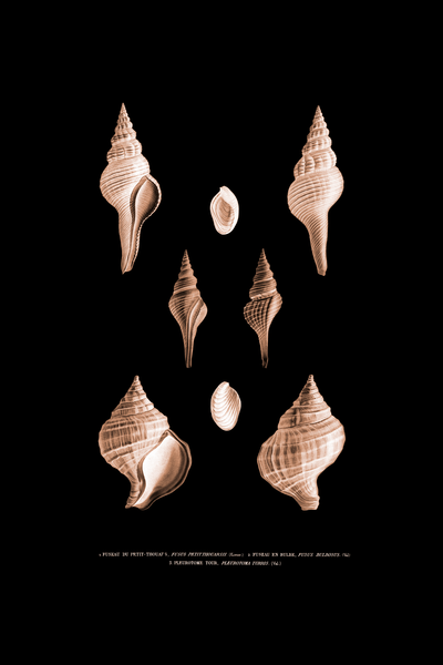 Shell Collection Sepia Suite 1