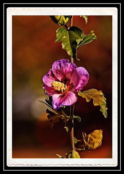 Flowered Vine