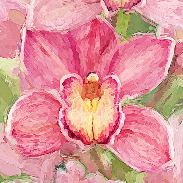 Orchid Joy - Oh Joy!