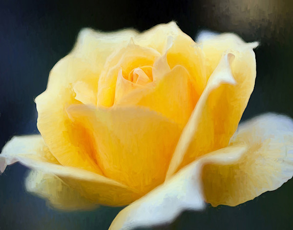Yellow Rose for Mickey
